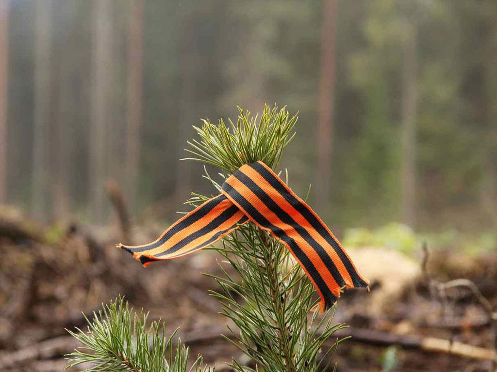 Акция «Лес Победы» в Коломне