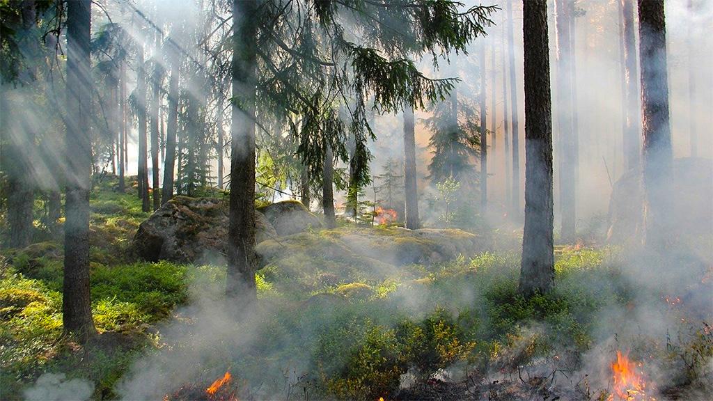 В Подмосковье ограничено посещение лесов